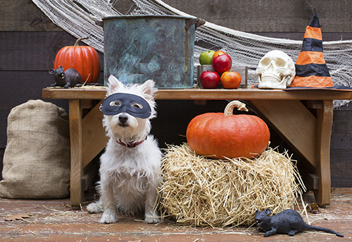 Halloween party dog